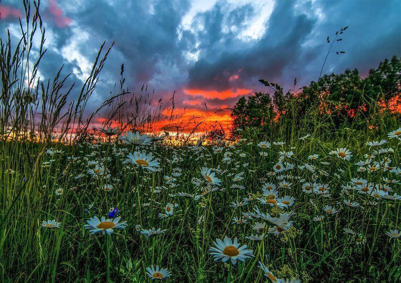 flowers,sunset,sky, clouds,summer Evening colorsphoto preview