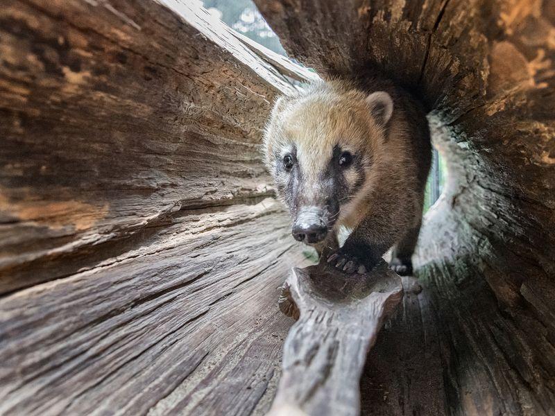 новосибирск зоопарк Носухаphoto preview