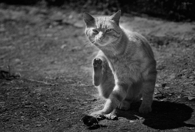 кот,котяра Прюветики ...photo preview