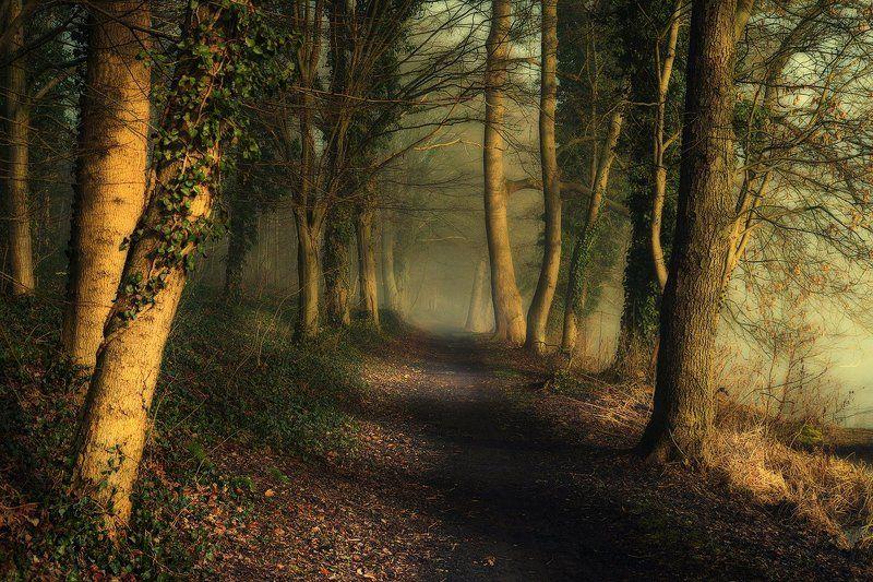 magic alley alejka trees path mist magic foggy road leaf green poland Magic alleyphoto preview