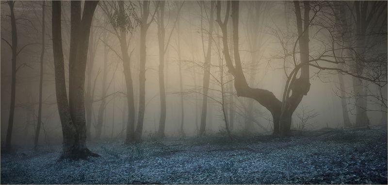 Мистический лес 11photo preview