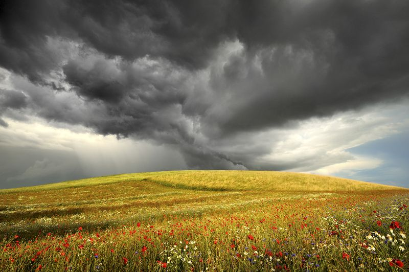 background, blooming, blue, botanical, clouds, cornflowers, dramatically, ears, field, flora, flower, garden, grain, grass, green, grimly, grow, idyllic, landscape, meadow, natural, nature, outdoor, panoramic, papaver, petal, plants, poppy, red, rhoeas, s Before the stormphoto preview
