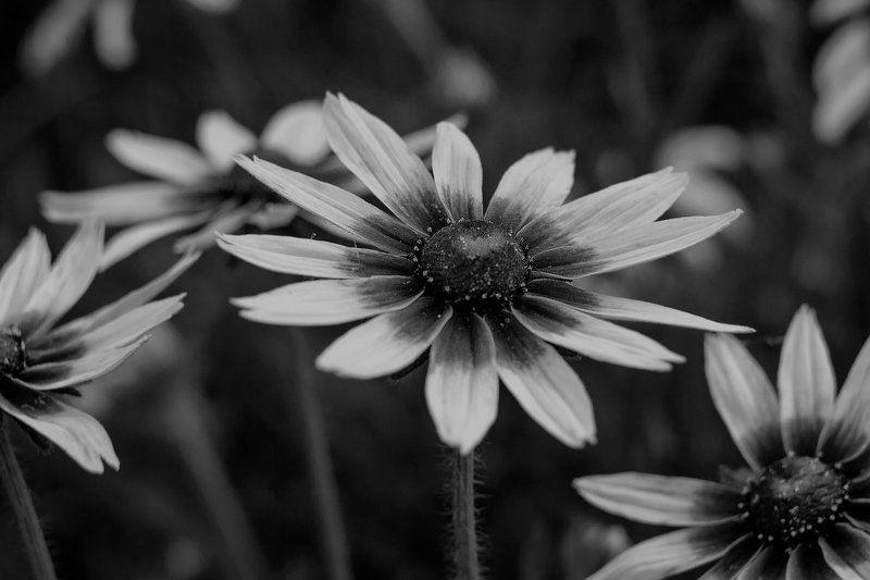 цветы Экспромт ...photo preview