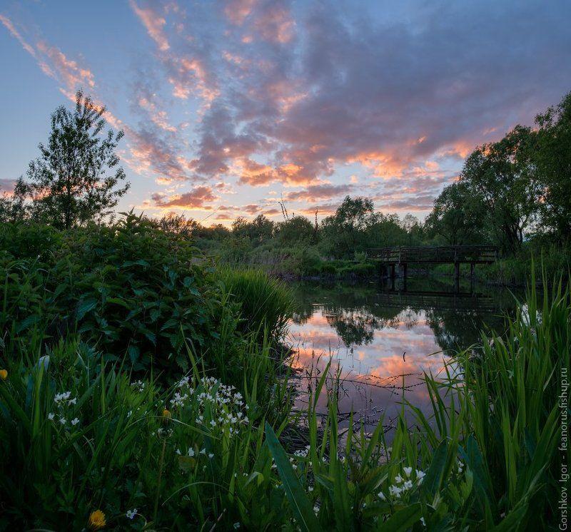 москва,свиблово,закат,река,яуза,трава,цветы Закат в Свибловоphoto preview