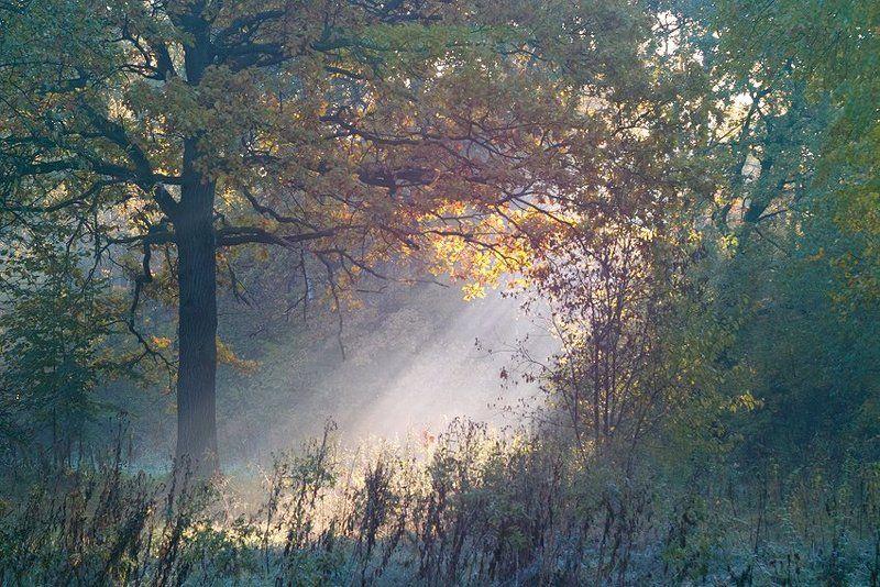 луч света в тёмном царстве...photo preview