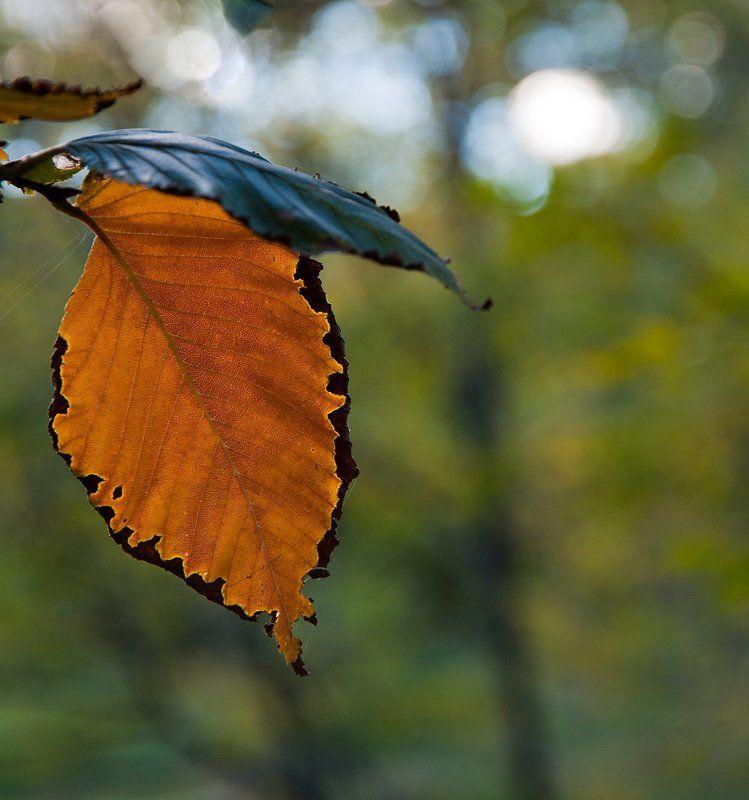 осень, листья, природа Контрасты осениphoto preview