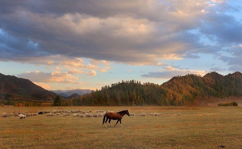пейзаж, природа, горы, вечер, закат, лошадь, алтай Один в поле не воин...photo preview