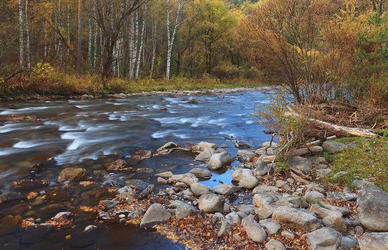 природа, пейзаж, осень, лес, река, алтай Шорох осенних листьевphoto preview