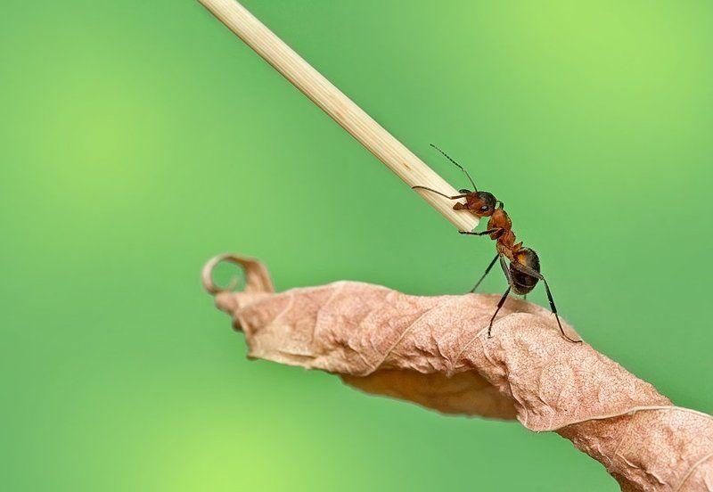 макро, природа, насекомые, муравей Эх, какое полено подвернулось!photo preview