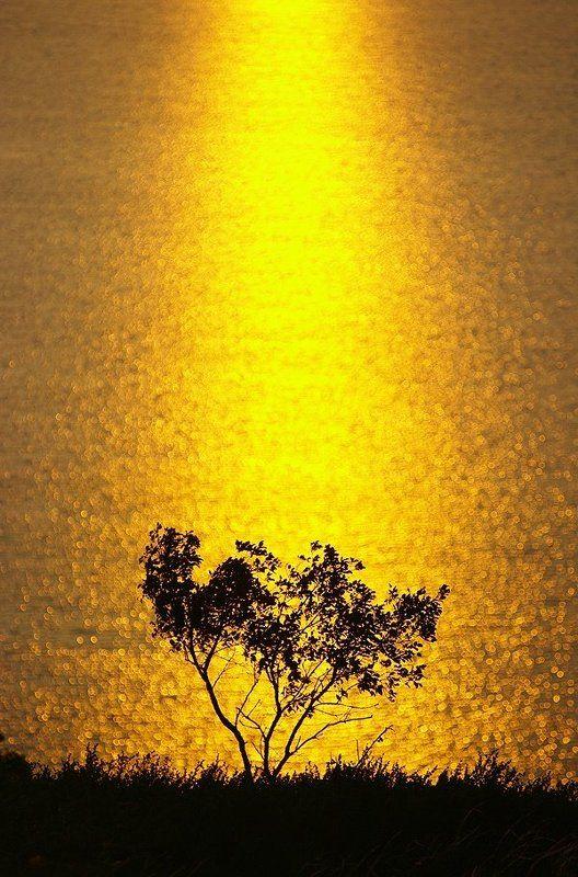 Золотой Кандры-Кульphoto preview