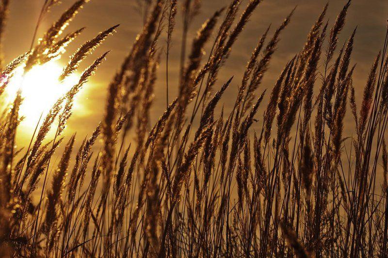 поле, осень, трава, закат Золотоphoto preview