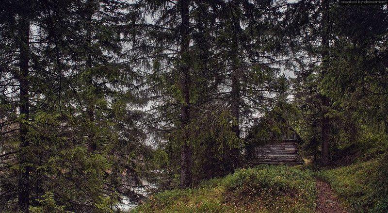 карелия, лес, хижина, старый дом ***photo preview