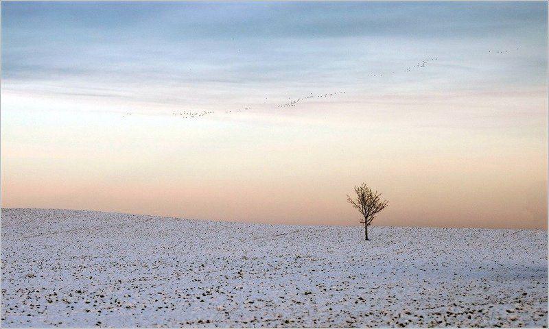 птицы, дерево,поле,минимализм Сверху смотрели последние птицыphoto preview