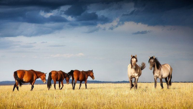 природа, казахстан, лошади, степь 3+2photo preview