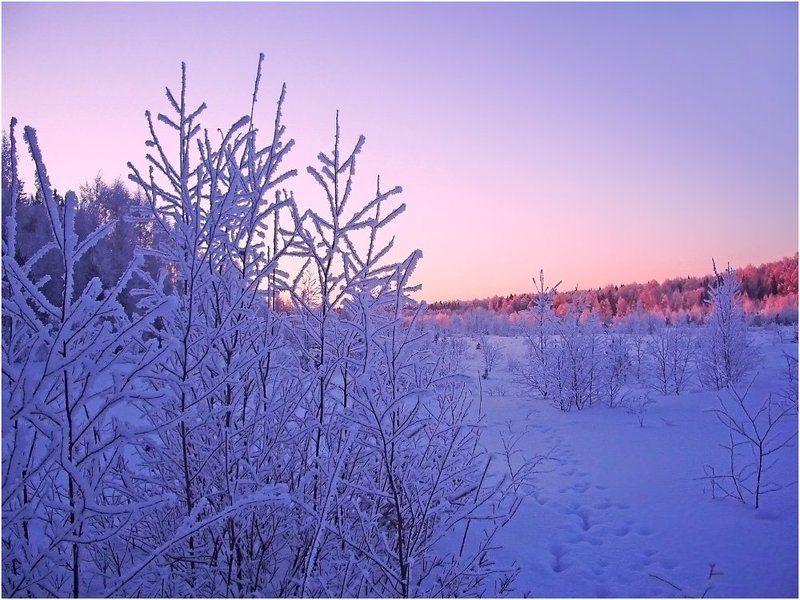 иней,зима,мороз,лед,удмуртия Путешествие в страну HOARFROSTphoto preview