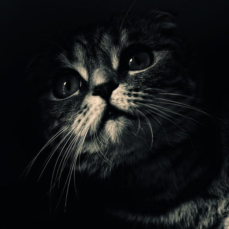 коты, кошки, кот, кошка А из темноты на Вас буду смотреть Я...photo preview