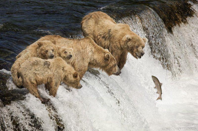 медведь на рыбалке урок