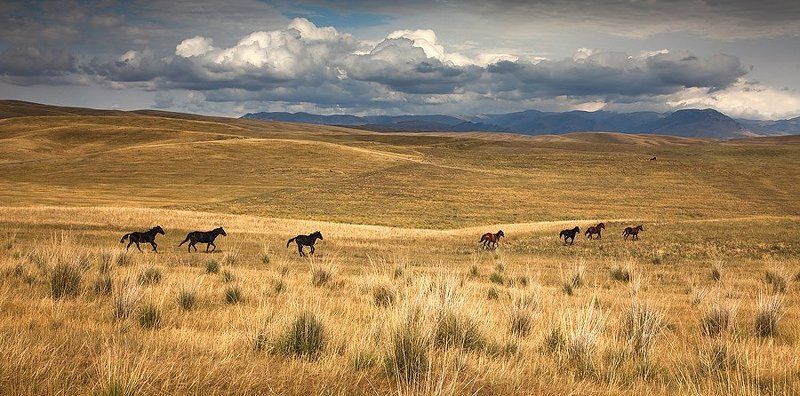 пейзаж, казахстан, лошади ***photo preview