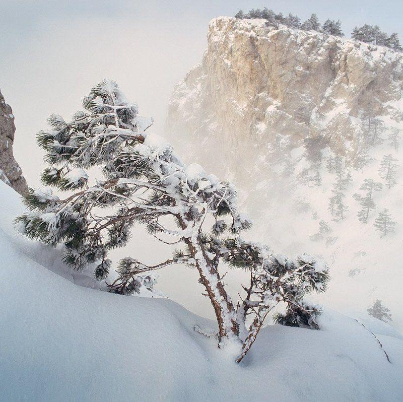 горы, снег, сосна, astia 100f лес20photo preview
