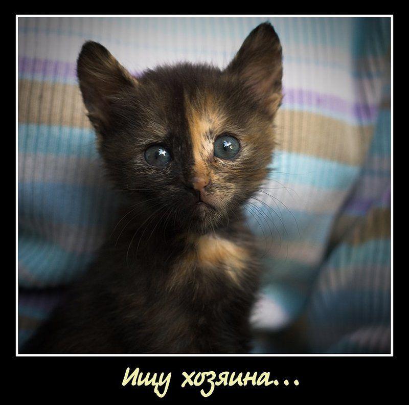 кот, котенок Бездомныйphoto preview