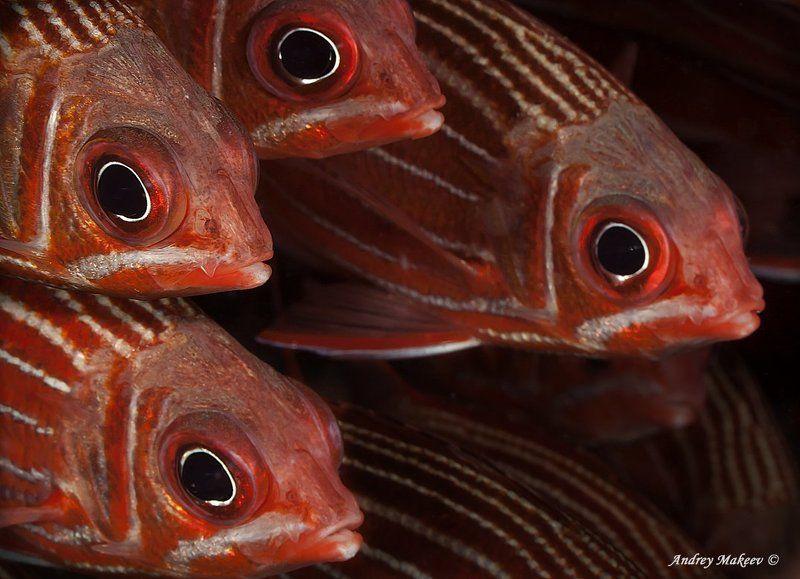 красное, море Сестричкиphoto preview