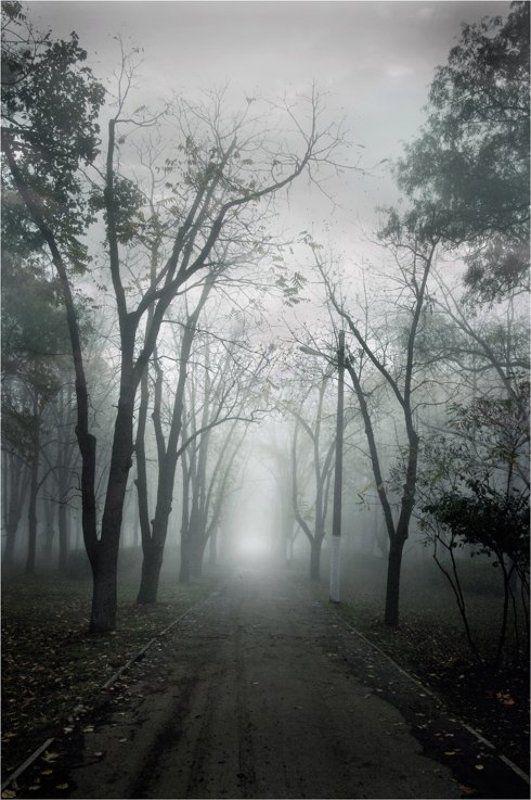 осень., туман По дороге в туманphoto preview