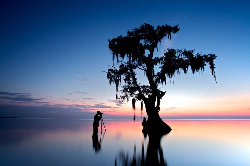 louisiana, lake, tree, swamps, cypress photo preview