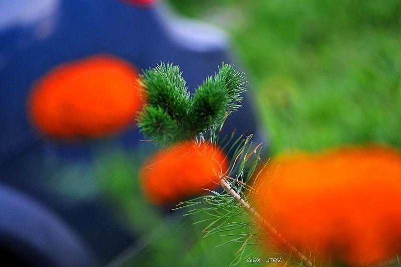 лето, цветы photo preview
