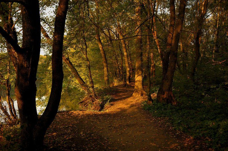 Лесной тропой...photo preview