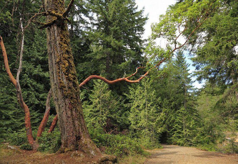 канада, лес, национальный парк, альберта, Лесными тропинками Канадыphoto preview