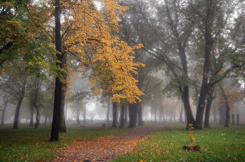 осень, парк Осень в паркеphoto preview