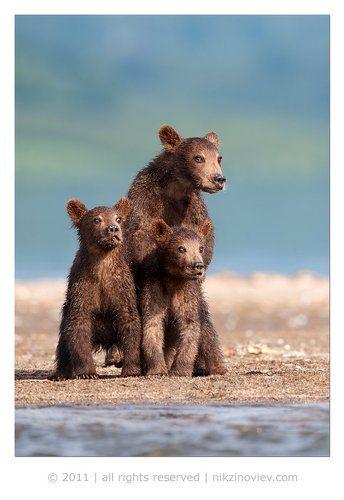 Братья Медведьевы