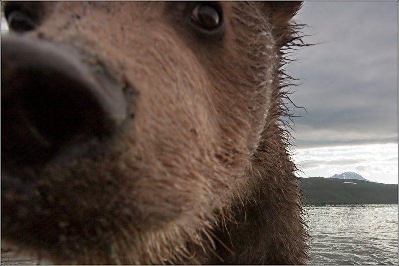 Медвежьи забавыphoto preview