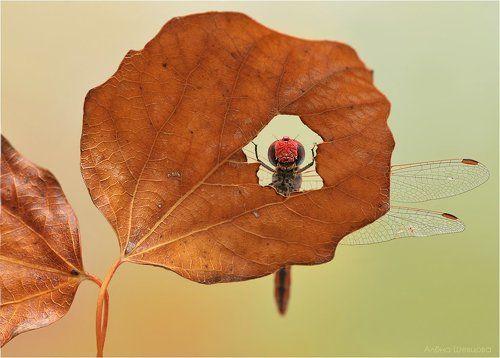 Окно в осень