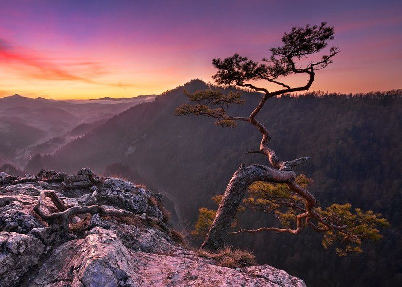 landscape,poland,tree,forest,light,mountain,fog Sokolicaphoto preview