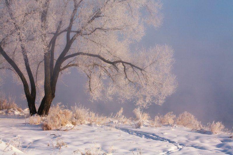 зима, мороз, утро ...Мысли о зиме...photo preview