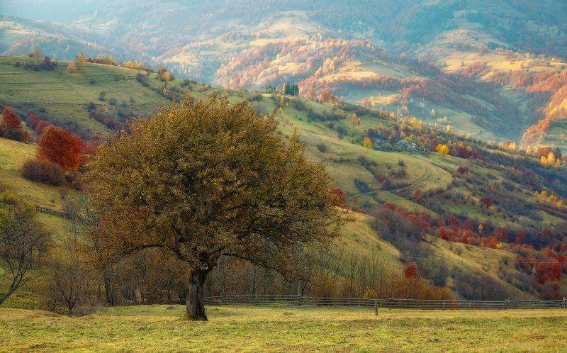 карпаты, осень, горы, яблоня ...Про яблоню...photo preview