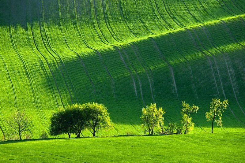 landscape, czech, republic, moravia, fields, tree, fairy, light fairy treephoto preview