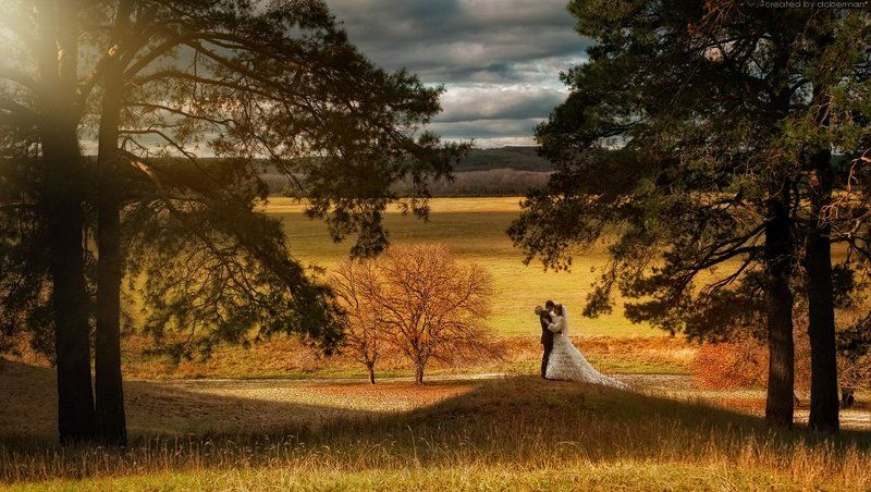 wedding, bride, forest, свадьба, лес, молодожены, сосны weddingphoto preview