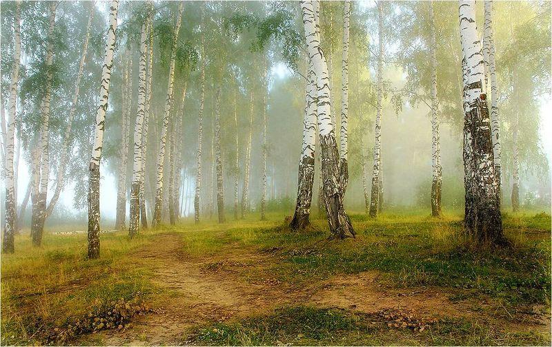 лето,утро,туман,лес про летоphoto preview