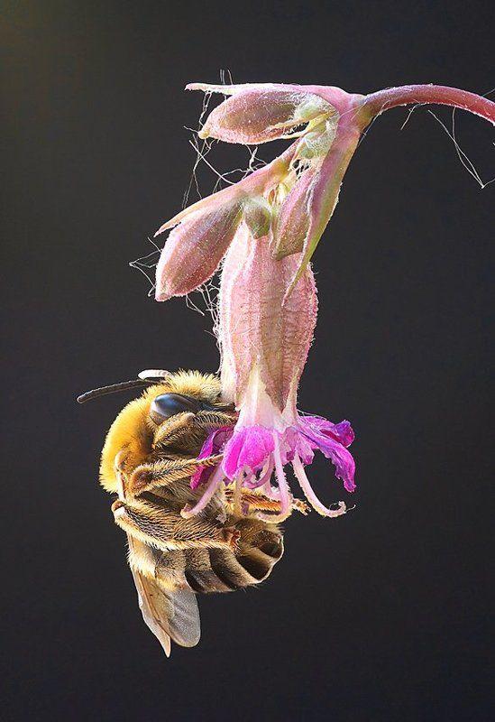 пчелиные сны...photo preview
