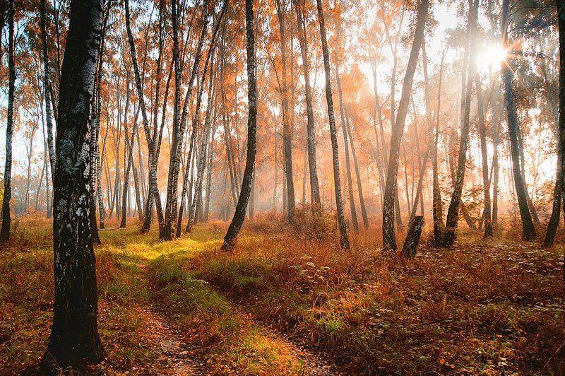 осень Осень. Утро.photo preview