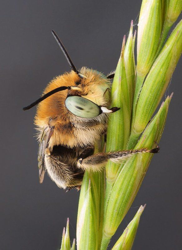 пчелиное утро...photo preview