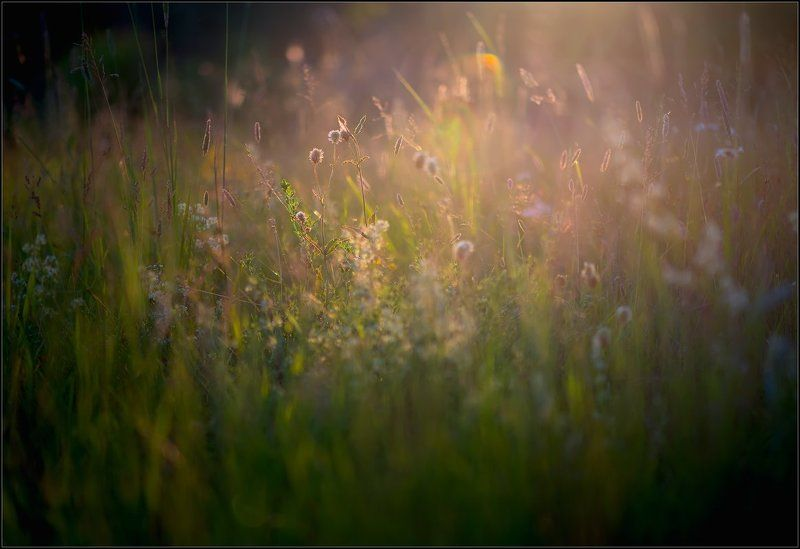 В лучах июньского заката.photo preview