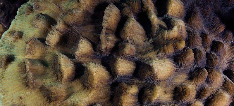 красное, море. Пролетая над горами Красного моря..photo preview