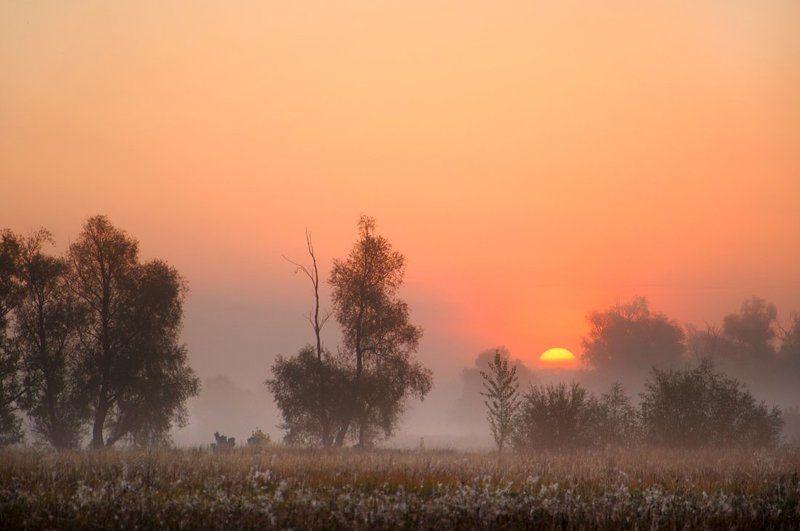 С добрым  утромphoto preview