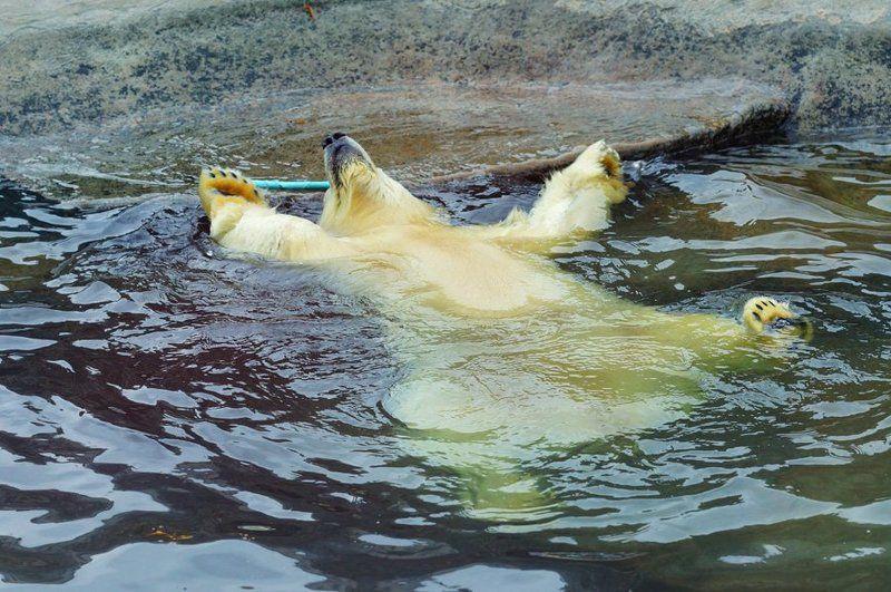 Медвежья Антальяphoto preview