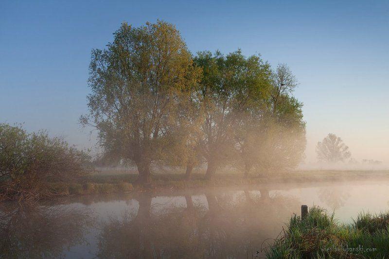 willows, morning, lubanski Willowsphoto preview