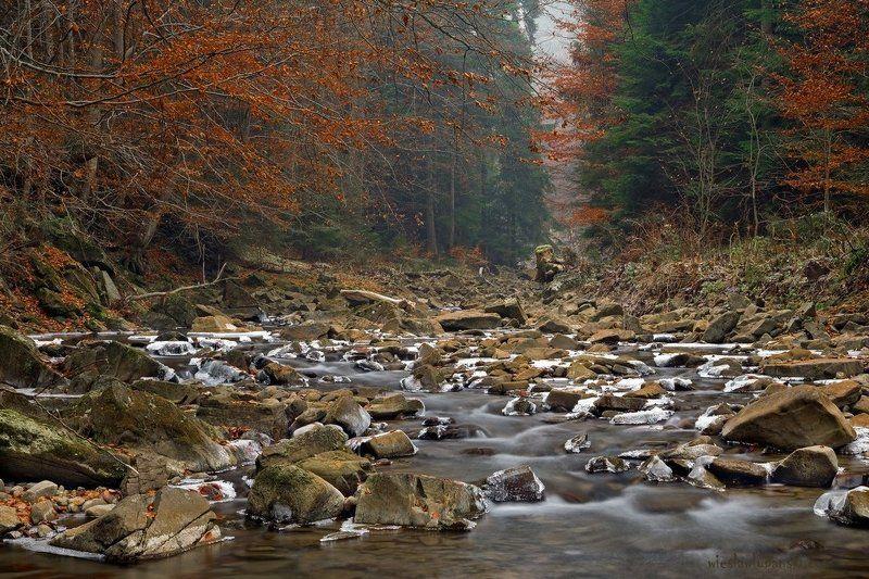 stream, november, lubanski streamphoto preview