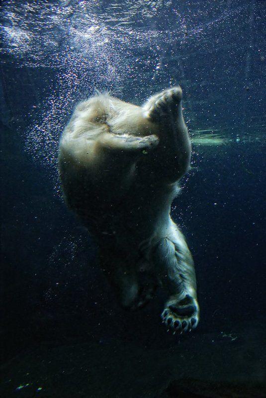 подводная рыбалкаphoto preview